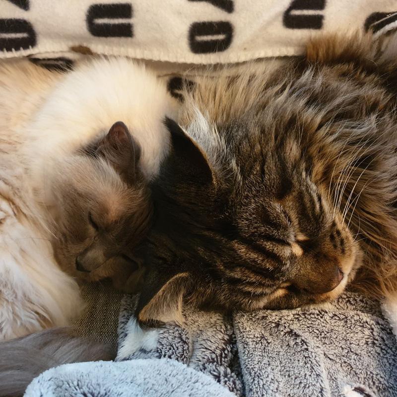 Päivi&kissat